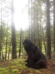 newf of the forest (M.J.H.) Tags: dog newfoundland maine 2012 islesboro