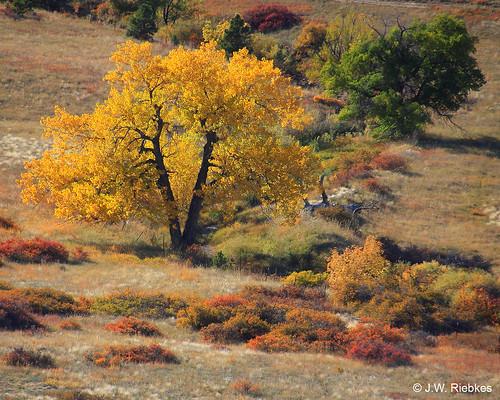 Photo - Fall Colors on Marshall Mesa