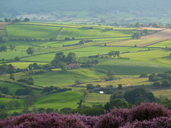 Danby (/Becca/) Tags: uk summer england countryside nationalpark scenery heather fields danby eskvalley northyorkshiremoors riveresk