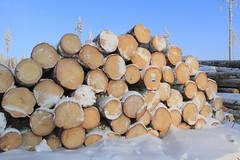 Forest harvesting_2012_01_24_0014 (FarmerJohnn) Tags: winter snow pine forest canon finland forestry stack lumi pino talvi spruce firewood plywood harvester mets laukaa 24105     mnty tukki pulpwood kuusi  polttopuu valkola   canoneos7d metsnhoito vaneri harvesteri petruma kuitupuu   forestharvesting juhanianttonen metsnkorjuu    hitonmki canonef2410540isusm