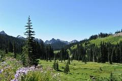 mt rainier national park, wa (hannu & hannele) Tags: park mountains washington mt pacific northwest mount national rainier wa medow