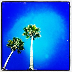 California during Winter! #igers #iphone #iphone... (Victor Hernandez Photography) Tags: uploaded:by=flickstagram instagram:photo=48225606123031 igers iphone iphone4 iphoneonly jjforum instadaily iphoneography iphonephotography jj instagood jamesfavourites jjchallenge instagram statigram instagramhub vdh joshjohnson thisiscalifornia hipstamatic bluesky palms lookup