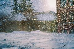 Glistening (seekjim20) Tags: winter snow bokeh cornell impression nikkor60mmf28 nikond7000