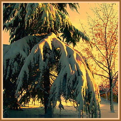 Snow coat (kontinova2) Tags: snow coat thegalaxy coth5 mygearandme mygearandmepremium mygearandmebronze mygearandmesilver rememberthatmomentlevel1 rememberthatmomentlevel2