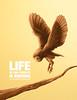 WOOD LIFE ® (Wilson Cáceres ®) Tags: wood illustration colombia owl ilustracion wolm