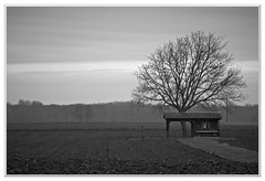 Solitude (ggtreize) Tags: solitude alsace paysage arbre champ cabane