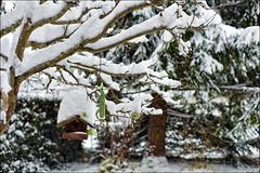 Notzeiten für die Vögel (Helmut Reichelt) Tags: leica schnee winter germany deutschland bavaria oberbayern garten m9 vogelhäuschen geretsried futterplatz schneehauben voigtlandernokton50mmf11 colorefexpro4 captureone7