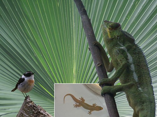 animaux de la Réunion