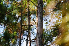 Things are what they seem (Zoom Lens) Tags: trees tree home leaves forest woods branches arbor bark trunk crown limbs needles twigs arboreal arborescent perennialwoodyplant johnrussellakazoomlens copyright©byjohnrussellallrightsreserved