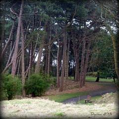 Trees in the Wind (pixmad) Tags: january panasonic southport 2013 heskethpark lumixfz45