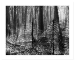 Determined (Demmer S) Tags: wood trees blackandwhite bw tree nature monochrome metal forest fence blackwhite jump jumping wire woods pattern steel confine guard fences screen deer chainlink stop wires surround barrier fencing shield secure block determined chainlinkfence upright boundary fenc