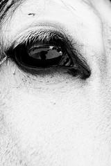 Reflect me... (rodrigo ojeda) Tags: bw horse eye blancoynegro animal animals contrast mexico caballo blackwhite nikon mexicocity farm contraste whitehorse rancho granja elcampo edodemexico byrodrigoojeda photographerrodrigoojeda nikond800
