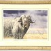 19. Limited Edition Artist Signed Water Buffalo Print