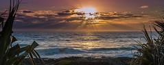 sunrays snapper rocks (rod marshall) Tags: sunrise snapperrocks bestsunrise sunrisesnapperrocksbestsunrise sunrays