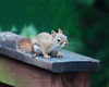 all creatures great and small (sparkleplenty_fotos) Tags: squirrel babysquirrel nature cute hss happysliderssunday soft furry baby