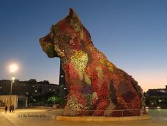 Puppy-.Museo Guggenheim Bilbao. (lameato feliz) Tags: bilbao euskadi escultura puppy guggenheimbilbao flores perro arte