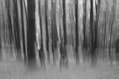 Wald VI (Radek Lokos Fotografie) Tags: wald wood blackforest schwarzwald radeklokosfotografie monochrome schwarz weiss