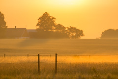 Morning light - HFF!
