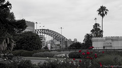 View of the Sydney Harbour Bridge from the Botanical Gardens (TwoTripleFive) Tags: australia backpacking downunder travelling sydneycbd sydney sydneybotanicalgardens botanicalgardens nature harbourbridge bridge landmark