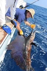 Ben Bartnicke Sail (arkben) Tags: ben bartnicke benjamin costa rica sailfish stephen