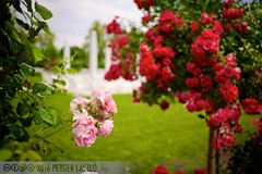 PLW_5609 (Laszlo Perger) Tags: wien vienna sterreich austria blumengarten hirschstetten flowergarden