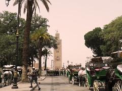 Koutoubia Mosque, Marrakech - Marrakech guided city tour (Morocco Objectif) Tags: marrakechcameltrekking marrakechquadbiking moroccooffroad moroccoatlanticcoasttour moroccocanyonstrip marrakechguidedcitytours marrakechdaytrips morocccodeserttrips saharatour moroccoatlanticoceantrip moroccoimperialcities moroccoadventuretrip moroccodeserttrips deserttoursfrommarrakech daytripsfrommarrakech moroccocameltrek moroccodeserttours merzouga ergchebbi saharadesert sanddunes morocco moroccoobjectif cameltrek offroad berber nomad moroccodeserttour moroccotour moroccotrip moroccoexcursions excursionsinmorocco marrakechtrips marrakechtours desertsafari privatetoursinmorocco moroccoadventures discovermorocco moroccoadventuretours adventuretravelfrommarrakech moroccooffroadtrips marrakechoffroadtours atlasmountains maroc marruecos marocco marroc marrocos marokko maroko