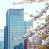 Tokyo Hanami (Toni Kaarttinen) Tags: japan 日本 japonia اليابان японія япония japó japonsko jaapan ژاپن japani japon xapón ιαπωνία יפן जापान japán jepang an tseapáin giappone 일본 japāna japonija јапонија japão јапан japonska japón hapon ประเทศญี่ปุ่น japonya nhật bản tokyo tokio japanese sakura hanami hanami2016 cherry cherries flower blossom cherryblossom cheeryblossoms cherryblossoms cheryblossom cherryflower celebration spring happiness skyscraper imperial palace imperialpalace