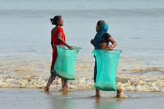 Hungry Shells....... (pallab seth) Tags: sea india industry beach women waves basket candid poor feeder poultry exploitation lowtide collectors orissa bengal collecting villagers bayofbengal digha traders calciumcarbonate limepaint middlemen brokenseashells governmentintervention uadaypur