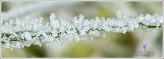 Frost particles on a blade of grass (rachbaker13) Tags: winter macro frost december macrophotography frostonleaves inclose macrowork rachelbakerphotography