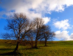 Trees in a Row (murtphillips) Tags: superb simply mygearandme rememberthatmomentlevel1 rememberthatmomentlevel2