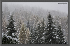 Snow Snow Snow! (LucaL Photographer) Tags: trees snow tree alberi photography luca nikon d digitale sigma f neve 40 28 20 fotografia inverno f28 dx 3100 2040 dgital sigma2040 innevati focale lerda visitpiedmont 3xxx d3100 31xx nikond3100 lucalphotographer lucalerda