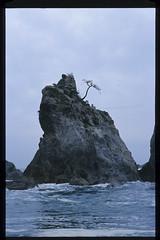121006-M6-Color-Heliar-75mm-E100VS-11 (wing of kaz) Tags: leica beach japan iwate e100vs m6 jodogahama miyakoshi