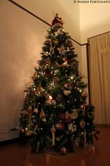 My Christmas Tree (Mario Fortunato) Tags: santa christmas light angel lights christmastree led santaclaus luci merrychristmas natale luce 2012 alberodinatale babbonatale buonnatale 2013 mariofortunato xxskullkillxx