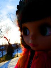 352/365 Sunset over the backyard...