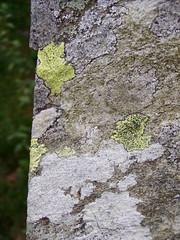 Capel Garmon [October 2010] (DizDiz) Tags: uk wales lichen prehistoric neolithic burialchamber olympusc720uz