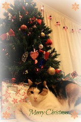 Merry Christmas (tofu_catgirl) Tags: christmas xmas cute cat kitty card img6636