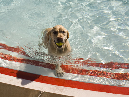 Photo - Dog Dayz at Boulder pools