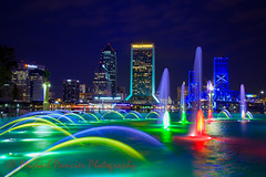 Jacksonville Skyline (Michael Pancier Photography) Tags: nature birds us unitedstates florida beaches jacksonville fernandinabeach northflorida ameliaisland travelphotography michaelpancier michaelpancierphotography floridastateparks avianphotography floridaphotography michaelapancier wwwmichaelpancierphotographycom