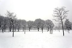 Un bianco angolo di Milano (fotopierino) Tags: italy parco milan alberi canon italia mark milano iii bn neve di 5d albero bianco lombardia nero 1740mm trenno fotopierino