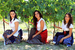 The history of a wine begins with the best harvest (EmaT19) Tags: girls italy 3 green smile sisters countryside vineyard italian women italia dress wine traditional harvest grapes marche abruzzo ascolipiceno offida