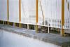 Il gatto del mare (andreazz92) Tags: leica winter rome roma film analog cat eyes fuji eating superia sunny occhi 400 sole inverno gatto elmar ostia mangia xtra r5 vario pellicola leitz ringhiera smalldof