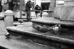 Pigeons at the Annasule (2) (emiel_dk) Tags: tirol pigeons tyrol innsbruck tauben panf jupiter8 ilfordpanfplus iso50 zorki3 annasule mariatheresienstrase jupiter850f20