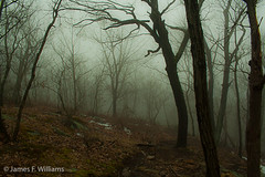 Into the haunted forest... (jiminius) Tags: trees fog forest newjersey raw haunted spooky lightroom