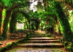 rainforest walk (Jeff 05) Tags: