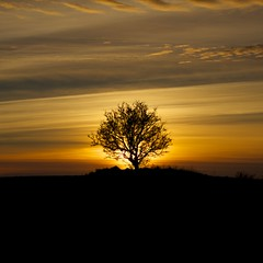 the lone tree (thatgirlwiththekicks) Tags: blue trees ireland winter sunset sky dublin orange sun silhouette yellow clouds golden day cloudy hollywood fingal ballyboughal