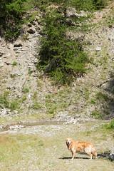 IMG_6679 (rickyrebora) Tags: col basset sauze doulx sestriere summer mountain montagna prati