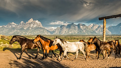 Triangle X horses - Explore (Marvin Bredel) Tags: ranch light sky horses storm morninglight moving shadows action explore wyoming tetons jacksonhole darkclouds grandtetonnationalpark duderanch trianglex marvinbredel nikond750