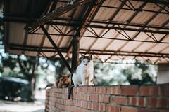 (Cat Zheng) Tags: taiwan xpro2 xseries mitakon 35mm f095 fujifilm taichung travel