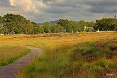 Forsinard Sutherland Scotland (Labes59) Tags: scotland sutherland theflowcountry rspb rspbcentre wildlife walks wildflowers bogs naturereserves forsinard unitedkingdom uk europe