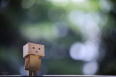 (M.K. Design) Tags: 2016                taiwan puli infant danboard portrait nikon d800e afs 105mmf14e ed tele primelens baby babe bokeh nature bokehful life